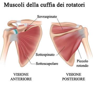 muscoli-cuffia-rotatori